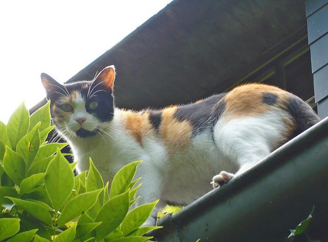 Gutter Cat