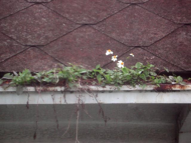 Gutter Flowers